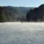 fog1  DHL